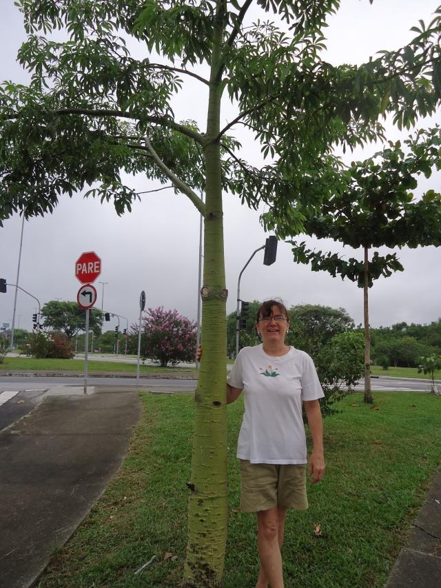 Laura e uma de suas árvores já crescidas.