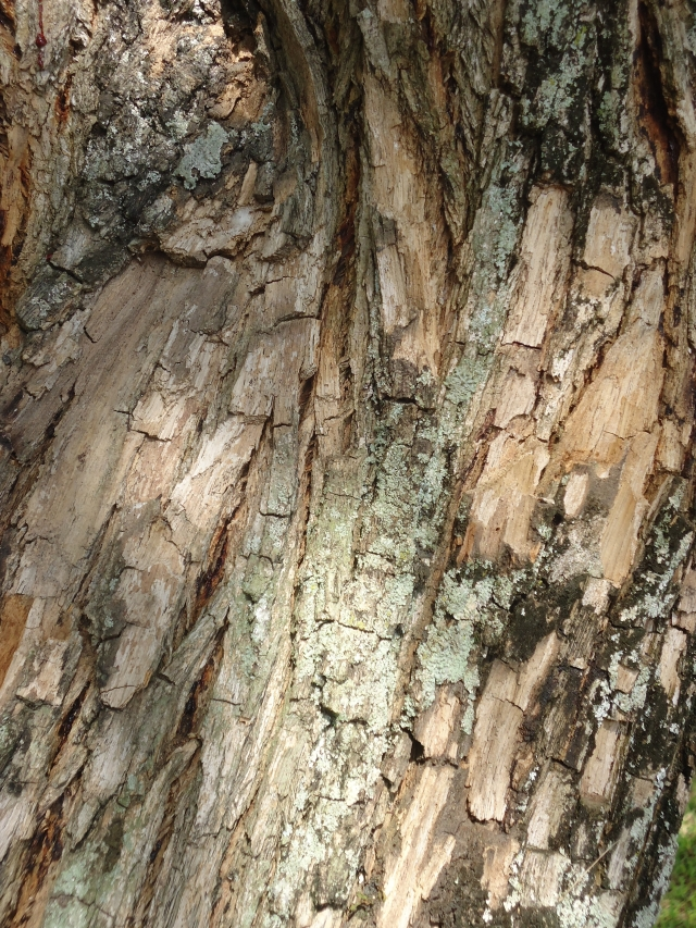 Tronco de árvore textura