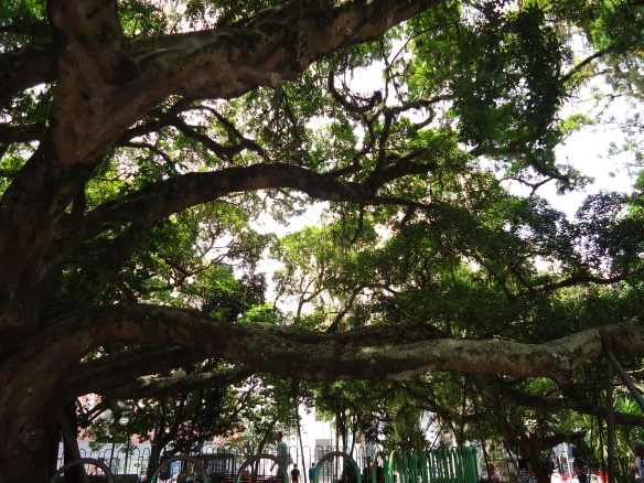Pç XV Velha Árvore