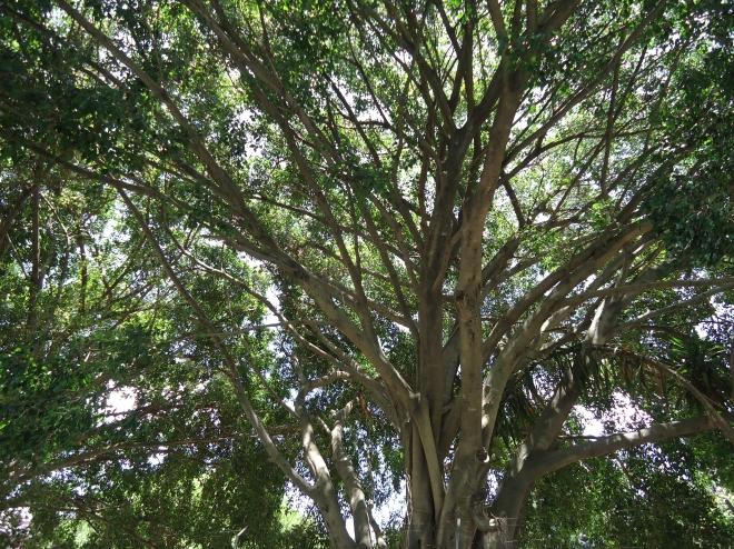 Amiga Árvore