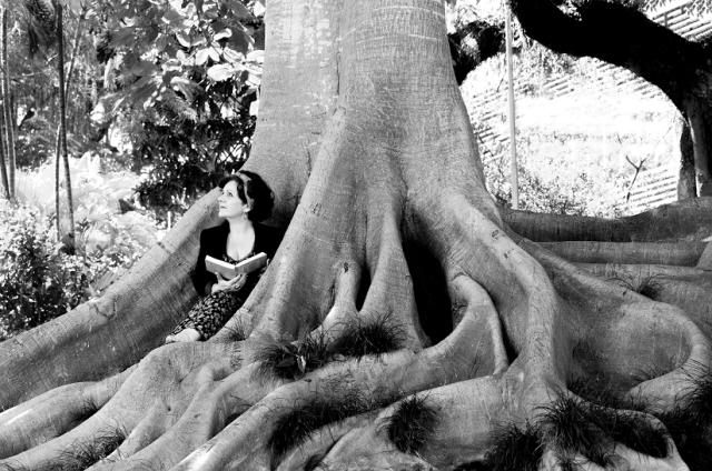 Foto divulgação Norma sob a Árvore